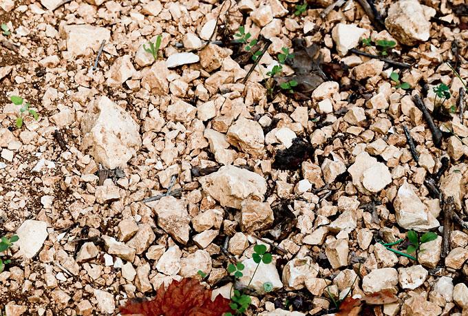 Terra Jovia Primitivo – Gioia del Colles jord